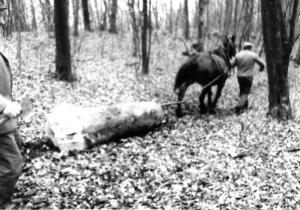 legno-vecchio-1978a